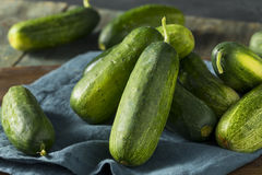 Raw Green Organic PIckle Cucumbers Royalty Free Stock Photography