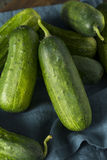 Raw Green Organic PIckle Cucumbers Royalty Free Stock Photo