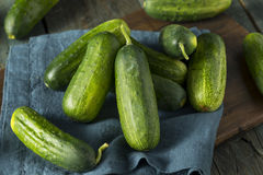 Raw Green Organic PIckle Cucumbers Stock Photography
