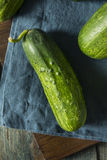 Raw Green Organic PIckle Cucumbers Stock Images