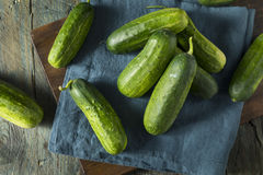 Raw Green Organic PIckle Cucumbers Royalty Free Stock Photos