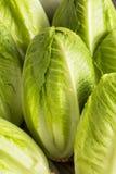 Raw Green Organic Romaine Lettuce Stock Photo
