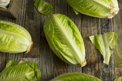 Raw Green Organic Romaine Lettuce Royalty Free Stock Images