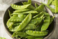 Raw Green Organic Snow Peas. Ready to Eat Stock Photography