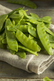 Raw Green Organic Snow Peas. Ready to Eat Stock Image