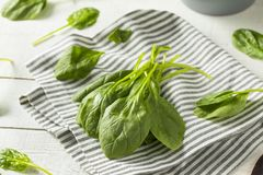 Raw Green Organic Spinach Leaves. Ready to Cook Stock Photography