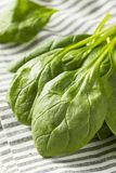 Raw Green Organic Spinach Leaves. Ready to Cook Royalty Free Stock Photography