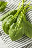Raw Green Organic Spinach Leaves. Ready to Cook Royalty Free Stock Photos