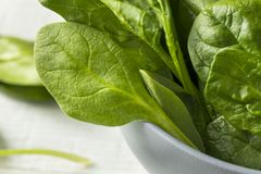 Raw Green Organic Spinach Leaves. Ready to Cook Stock Image