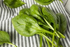 Raw Green Organic Spinach Leaves. Ready to Cook Royalty Free Stock Image