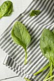 Raw Green Organic Spinach Leaves. Ready to Cook Stock Photos