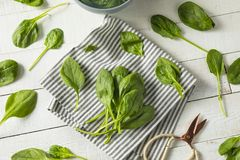 Raw Green Organic Spinach Leaves. Ready to Cook Royalty Free Stock Images