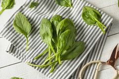 Raw Green Organic Spinach Leaves. Ready to Cook Royalty Free Stock Photo
