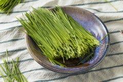 Raw Green Organic Wheat Grass stock photo