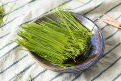 Raw Green Organic Wheat Grass royalty free stock image