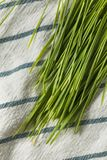 Raw Green Organic Wheat Grass royalty free stock image