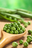 Raw Green Peas. Fresh raw green pea (lat. Pisum Sativum) seeds on wooden spoon (Selective Focus, Focus on the pea in the middle of the second row Royalty Free Stock Photography