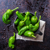 Raw green peppers pimientos de padron traditional spanish tapas Stock Images
