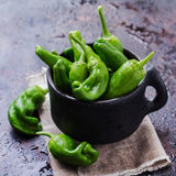 Raw green peppers pimientos de padron traditional spanish tapas Stock Image