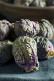 Raw Green and Purple Brussel Sprouts. Ready to Cook Stock Image