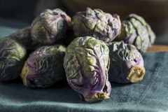 Raw Green and Purple Brussel Sprouts. Ready to Cook Royalty Free Stock Images