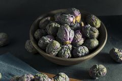 Raw Green and Purple Brussel Sprouts. Ready to Cook Stock Photography