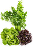 Raw green and red lettuce, bunch of celery. Royalty Free Stock Photo