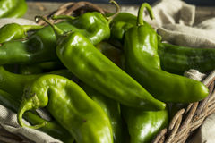 Raw Green Spicy Hatch Peppers royalty free stock photography