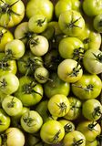 Raw green tomatoes in wooden box. Selective focus Royalty Free Stock Image