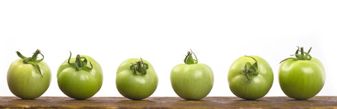 Raw green tomatoes. Green tomatoes on a wooden shelf with a white background Stock Photo