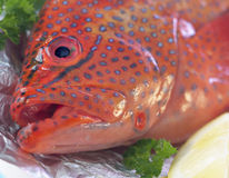 Raw grouper Stock Images