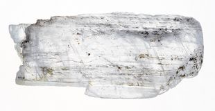 raw Gypsum Fish Tail crystal on white stock photo