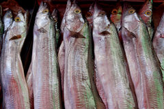 Raw hairtail fish Royalty Free Stock Photo