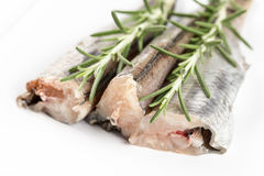 Raw hake fish with rosemary branches above white background.  Royalty Free Stock Photos