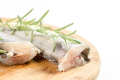 Raw hake fish with rosemary branches and white background as copy space.  Stock Images