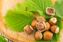 Raw hazelnuts on a green leaf Stock Image