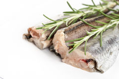 Raw healthy hake fish with rosemary on white background Royalty Free Stock Image