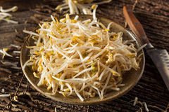 Raw Healthy White Bean Sprouts. Ready for Cooking Royalty Free Stock Image