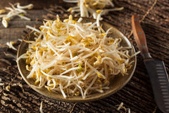 Raw Healthy White Bean Sprouts Royalty Free Stock Images
