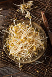 Raw Healthy White Bean Sprouts. Ready for Cooking Royalty Free Stock Images