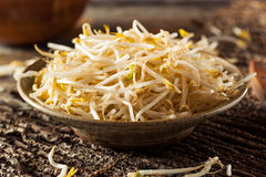 Raw Healthy White Bean Sprouts. Ready for Cooking Stock Photos