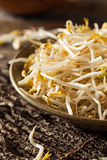 Raw Healthy White Bean Sprouts. Ready for Cooking Royalty Free Stock Photos