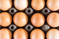 Raw hen egg in black plastic tray Stock Image