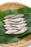 Raw honmoroko, japanese willow gudgeon Royalty Free Stock Photography