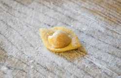 Raw italian cappelletti, fresh homemade pasta. Royalty Free Stock Images
