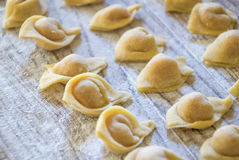 Raw italian cappelletti, fresh homemade pasta. Royalty Free Stock Image