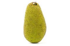 Raw jackfruit Royalty Free Stock Images
