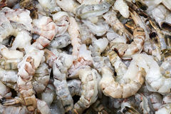 Raw king prawns Royalty Free Stock Photos