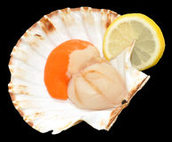 Raw King Scallop Royalty Free Stock Images