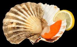 Raw King Scallop Royalty Free Stock Photography